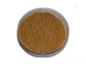 Organic Agaricus Blazei Murill Extract Powder