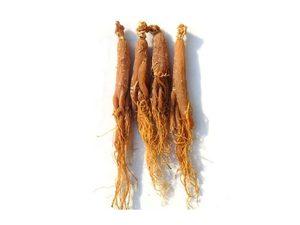organic red ginseng root